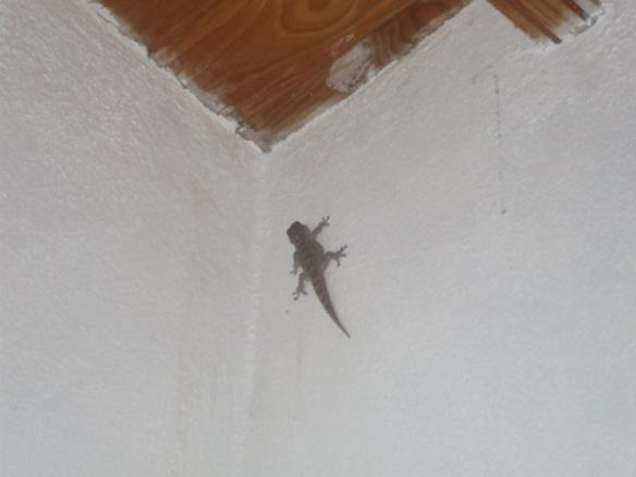 Salamandra en el dormitorio